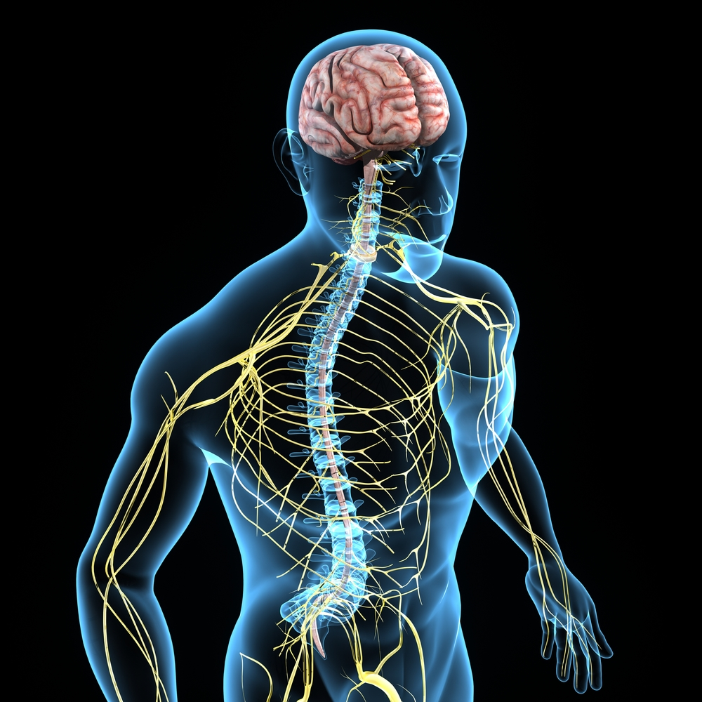 Interview with Dr. Askenase - Role of MSC-Derived Exosomes in Healing the Injured Spinal Cord