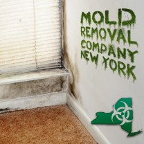 New York Mold Removal