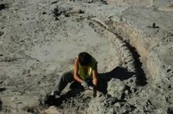 Excavando dinosaurios en Lo Hueco (Fuentes, Cuenca)