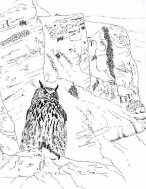 eagle owl illustration