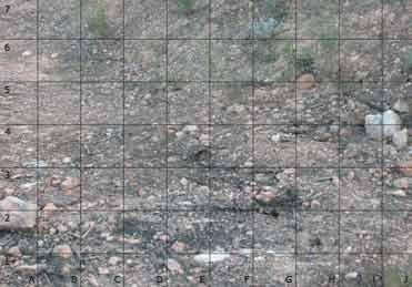 Spot the Red-necked Nightjar in Spain!