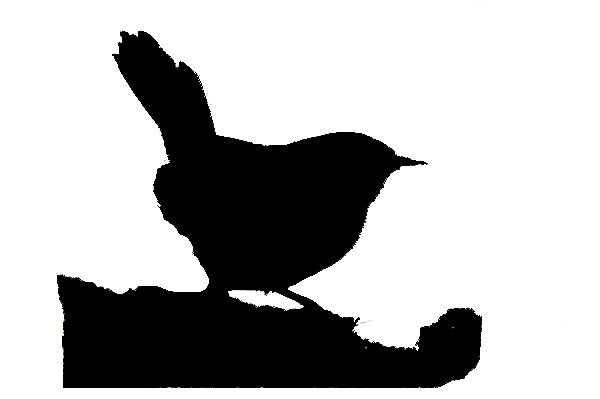 Bird silhouette 1