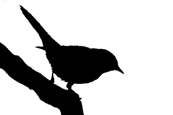 Bird silhouette 2