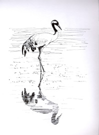 Common Cranes winter and migrate through Gallocanta