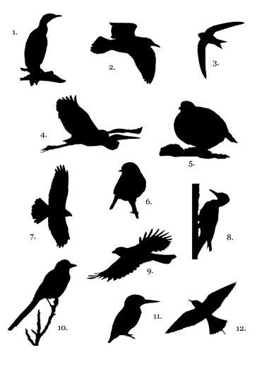 Bird silhouette competition