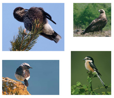 Algunas aves de Bulgaria