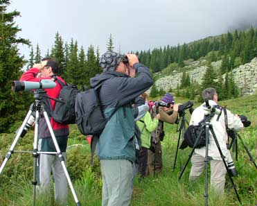 Birding at Vitosha