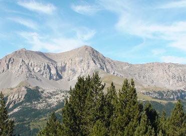 Birding the Pyrenees of Spain
