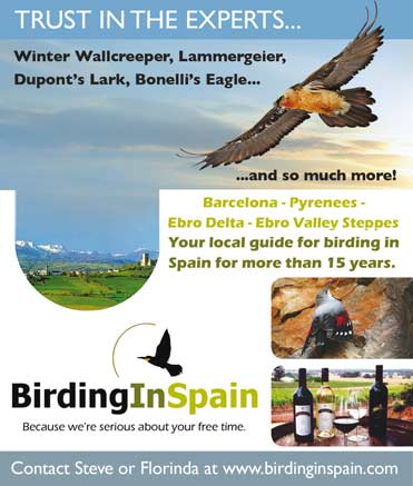 Birdwatching tours to Barcelona with Birding in Spain