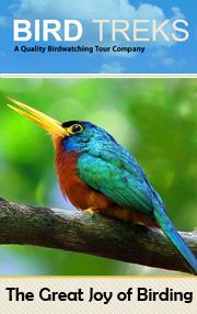 Bird Treks, USA