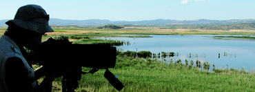 Birding in Navarra: Pitillas lagoon, an inland lake good for birds.