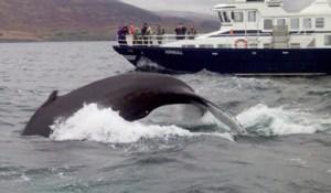 Balenaloblog