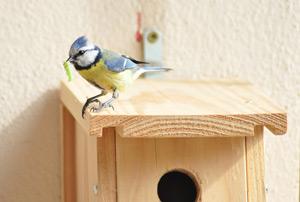 attirer-une-mesange-sur-son-balcon-miniature