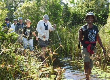 Wading through Zapata Swamp—on a quest for the Zapata Wren! (Photo by Erika Gates)