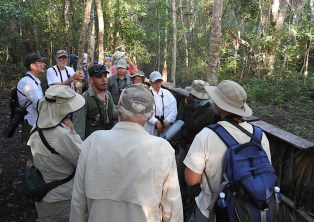 Waiting for the Blue-headed Quail-Dove. (Photo by Erika Gates)