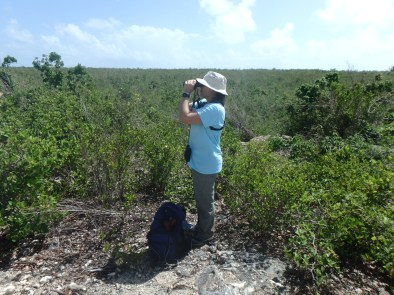 Sophia Steele surveying from the heights (Photo by Lenn Isidore)