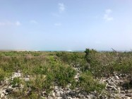 Low coastal scrub along the Atlantic coast of Barbuda (Photo by Jeff Gerbracht)