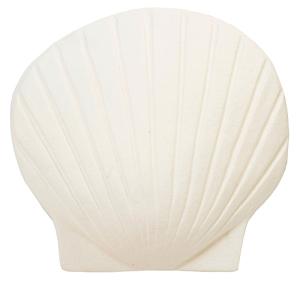 giant white shell
