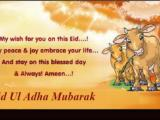 Bakra Cow Eid Wallpapers