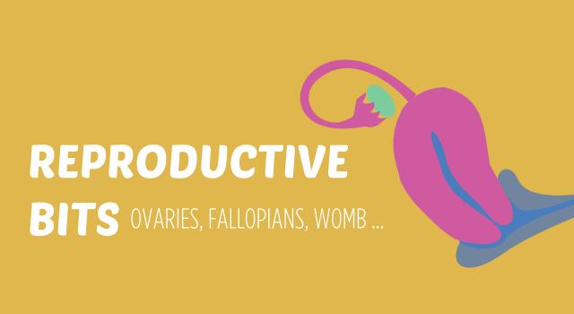 Reproductive Body Parts