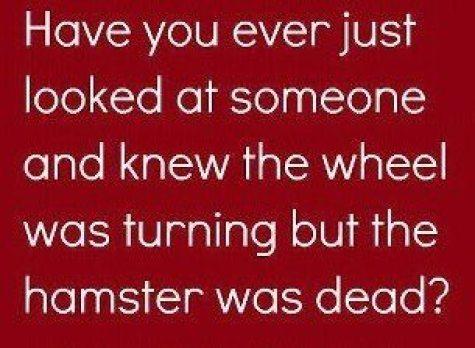 Hamster is dead