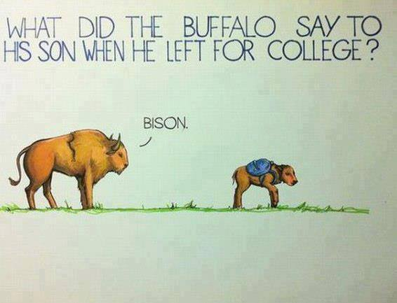 What did the buffalo say