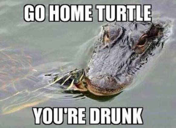 Go home turtle