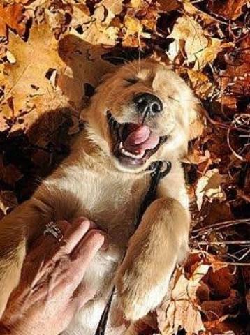 http://i2.wp.com/www.bitsandpieces.us/wp-content/uploads/2015/09/Dogs-love-autumn_3.jpg?resize=358%2C480