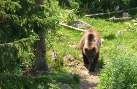 WWF atacă Guvernul pentru acceptarea parțială a unui studiu al Universității Transilvania cu privire la vânat