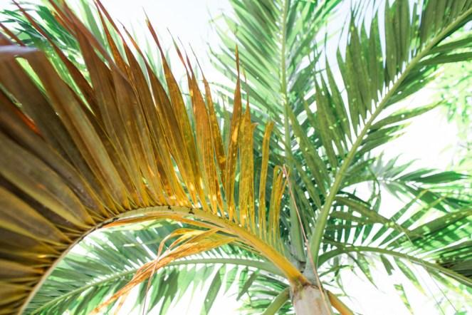 Blanccoco_Photographe_Martinique_Rhum_Clement_Depaz_Saint_Pierre_Grand_Riviere-21