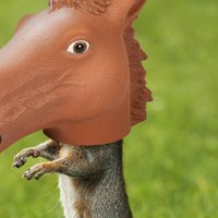 Horse Head Squirrel Feeder, a way to take 'arrogant squirrels down a peg'