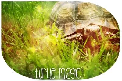 The Wisdom of Turtle