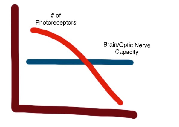 A hand-drawn graph showing the loss of photoreceptors over time in RP, as it relates to the capacity of the optic nerve and brain. There is a horizontal line representing the amount of input the optic nerve and brain can handle at one time. A second line starts in the upper left and slopes downward. It crosses the horizonatl line about halfway and ends in the lower right. This line represents the number of photoreceptors that someone with RP has, which decrease across their lifespan.