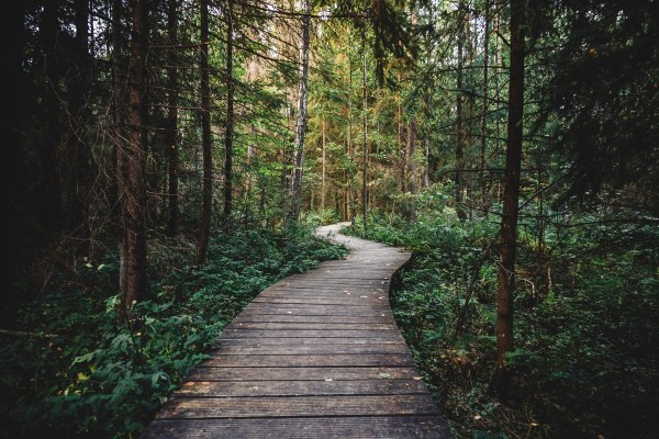 Photograph of a winding path through a dark forest. This is a quest, after all.