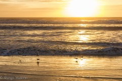 sea sunrise bird 朝日 海 砂浜 鳥