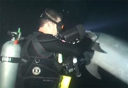 Amazing dolphin video