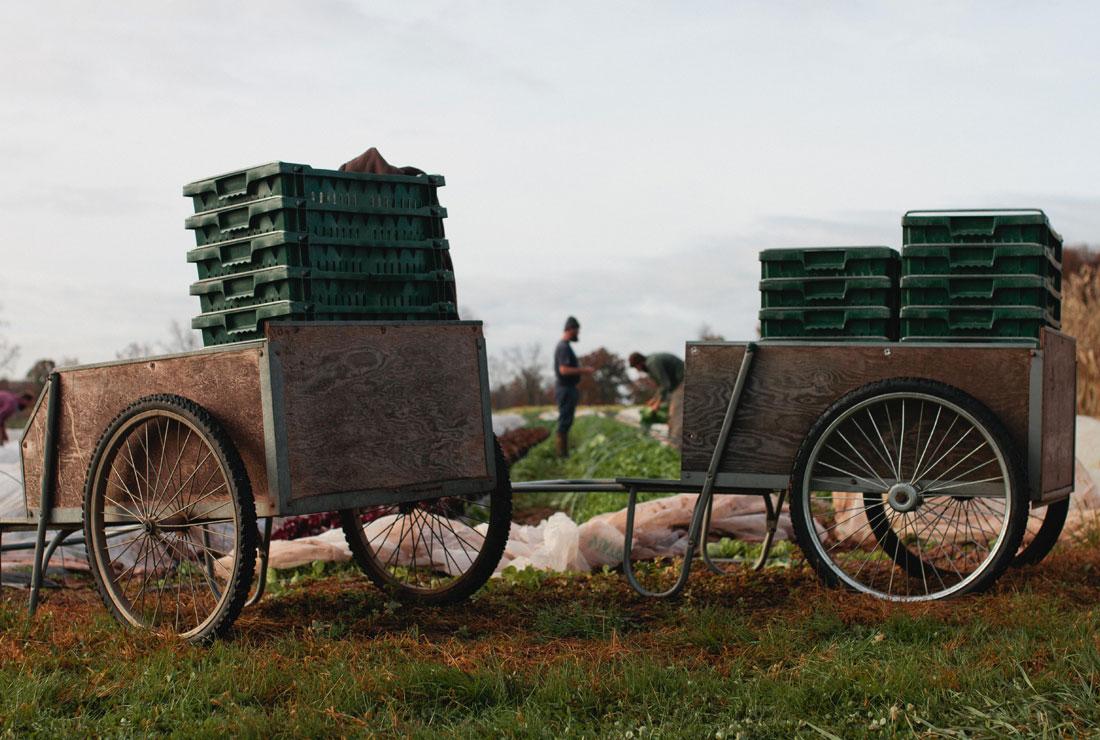 Blooming-Glen-Family-Wagon-Retina