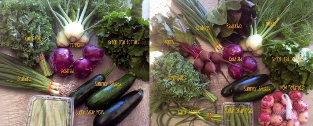 June 15 delivery shares, medium box on the left and large box on the right. Pictured at teh top of the post is CSA on-farm share week #3/A, 6/14/16.