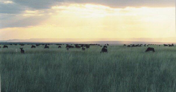 bens-photography-africa-plains
