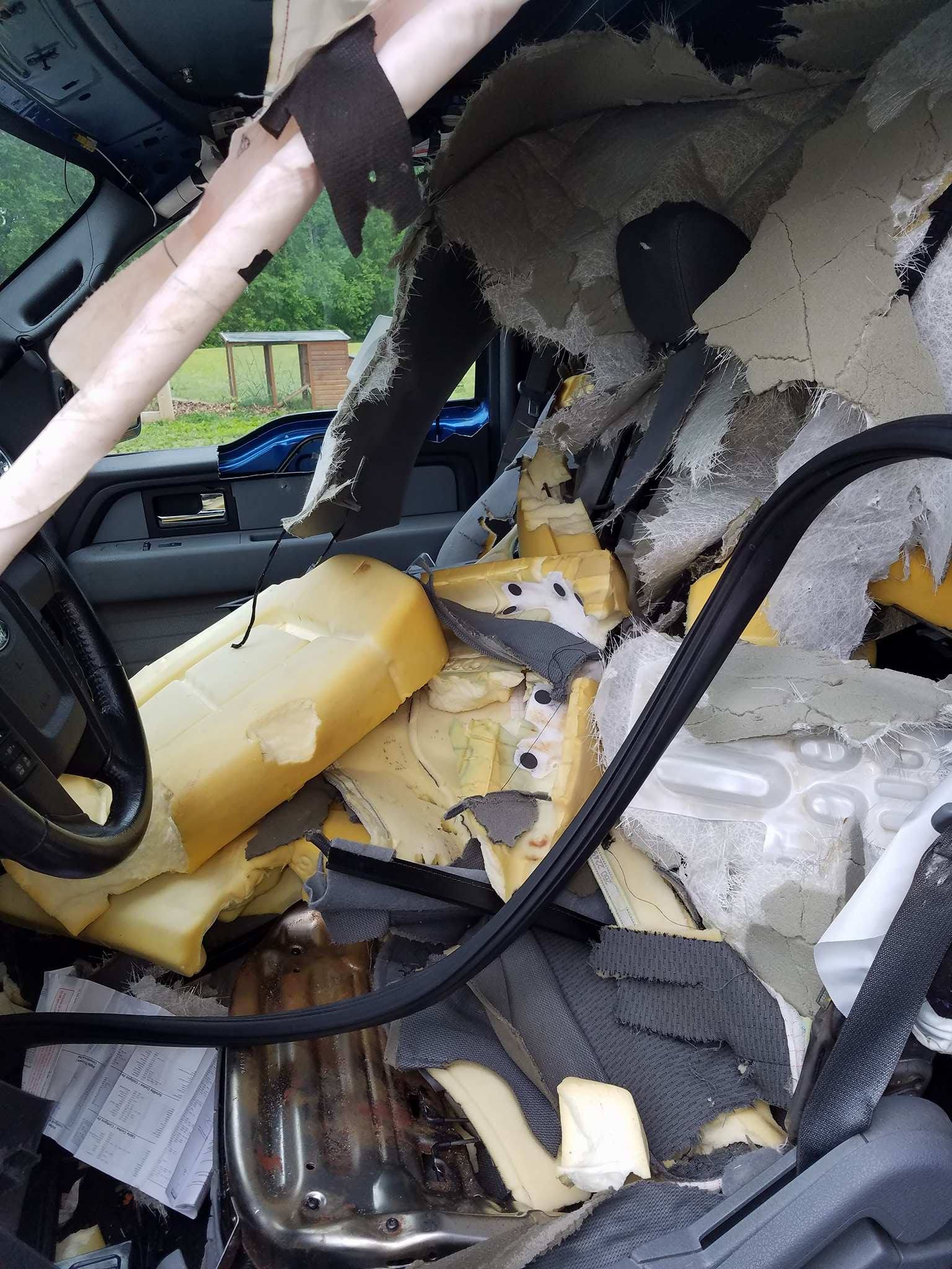 bear inside car last week in roanoke not only one one recently at wintergreen too blue. Black Bedroom Furniture Sets. Home Design Ideas