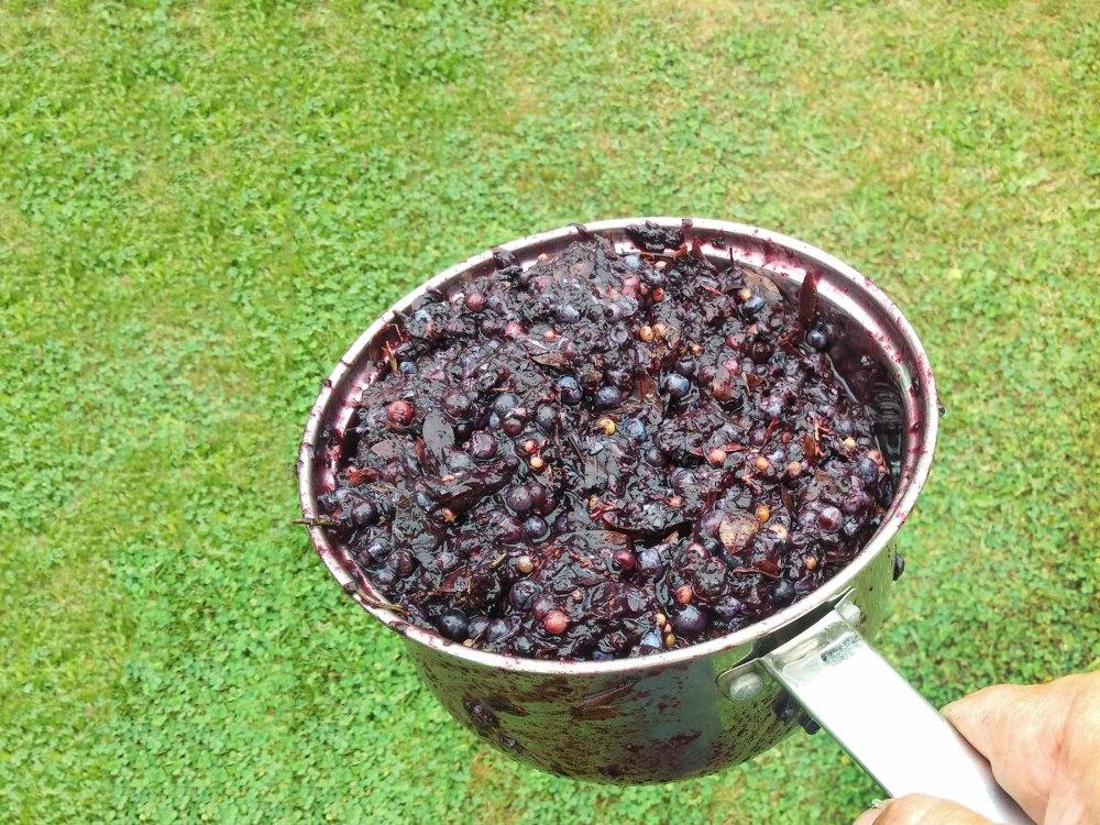 Blueberry pommace following fermentation