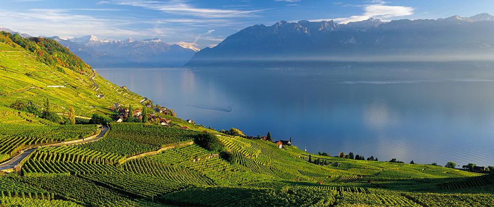 ВИноградники Лаво, Женевское озеро