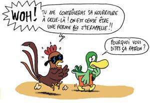 sti_poule