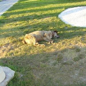 Nap on the grass in Bodrum Turkey