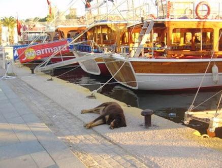 Bodrum Harbour Turkey