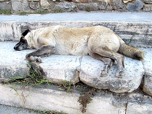 Historical site of Ephesus and dog asleep on the Odeon seat