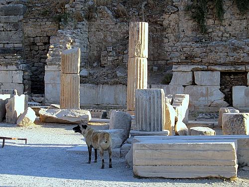 Ephesus Turkey at the Odeon, dog walking around
