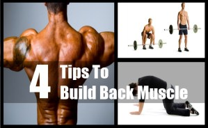 Build Back Muscle