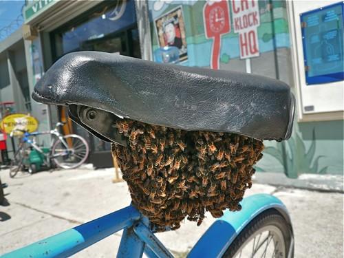 Bikeseatbeebeard