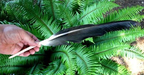 Eagle Feather On The Beach-2